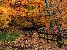 3a na leśnych ścieżkach